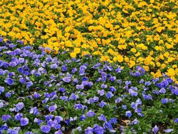 озеленители цветя