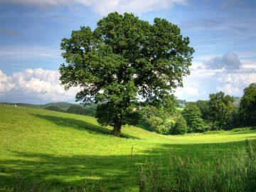 дърво гора