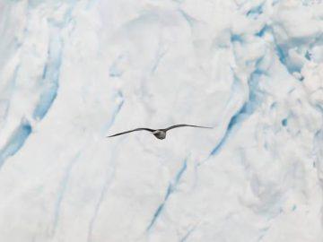 Дни на антарктическите науки Велико Търново